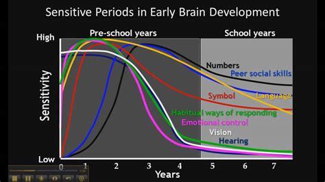 importance  early child development youtube
