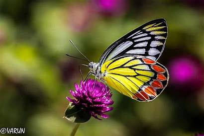 Butterfly Zoom Nature Insects Close Desktop Wallpapers