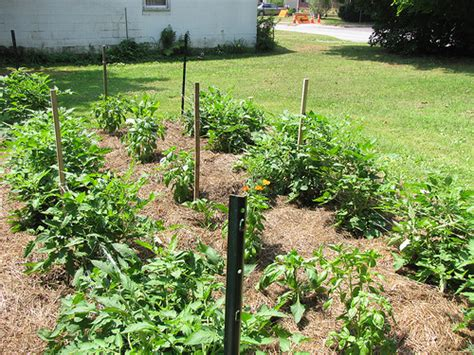 mulching your garden mulching your garden part 1 why mulch your garden frugal upstate