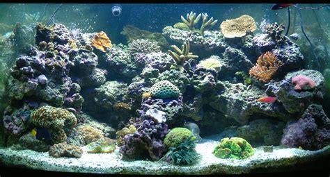 saltwater aquariums saltwater aquariums aquarium cares