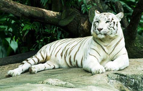 Se ha visto un total de 9163 veces. Pdf El Tigre Blanco   Libro Gratis