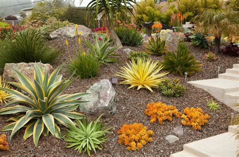 succulent landscaping gardens by gabriel san luis obispo landscapes and design california central coast ecological