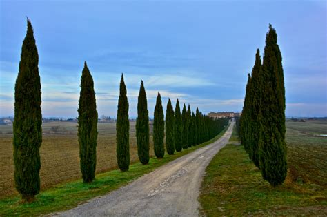 tuscan tree types picture of the day cypresses in tuscanny 171 twistedsifter