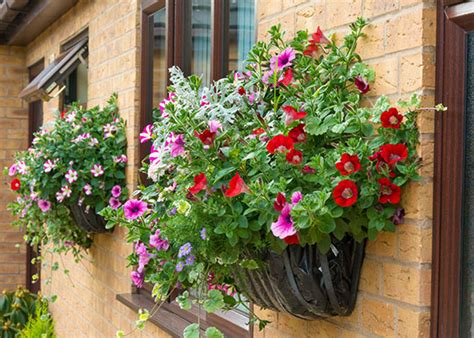 grow cool and container gardens garden club