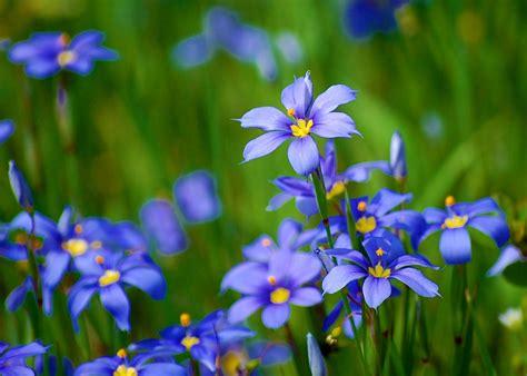 beautiful nature images  flowers hd wallpaper