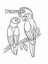 Coloring Parrot Pirate Parrots Realistic Printable Animals Getcolorings Birds Pag sketch template
