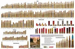 Ammo And Gun Collector  American Standard
