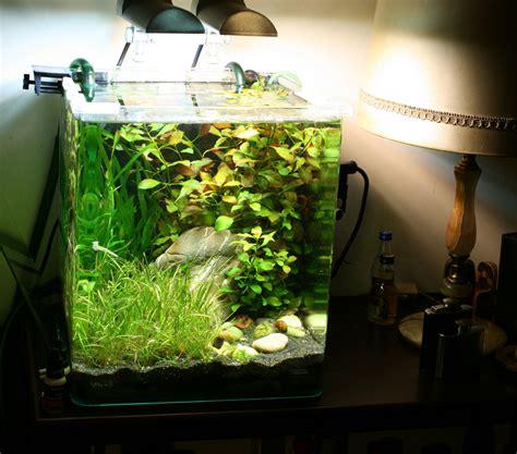 Cube Aquarium Aquascape by S C V Aquascaping Ideas Dennerle Nano Cube 30 Complete