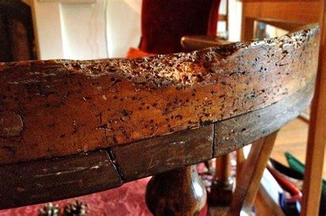 eliminare tarli dai mobili come eliminare i tarli pulire casa