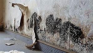 Schimmel Wand Entfernen : schimmel entfernen dauerhaft beseitigen raum analyse ~ Lizthompson.info Haus und Dekorationen
