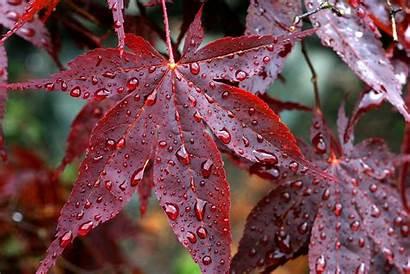 Leaves Autumn Rain Drops Wallpapers Veins Fall