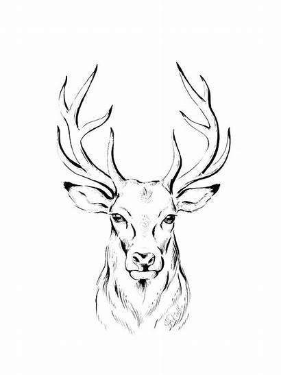 Deer Coloring Head Printable