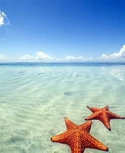 Beach and Starfish Wallpaper - WallpaperSafari