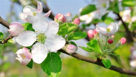 Nerakstītie likumi augļu koku un krūmu stādīšanā - DELFI