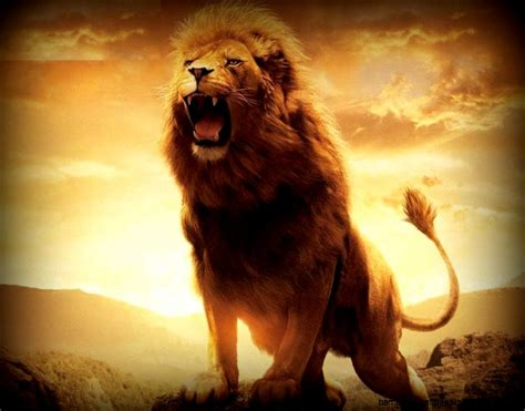 Lion Wallpaper Hd 1080p Widescreen  Amazing Wallpapers