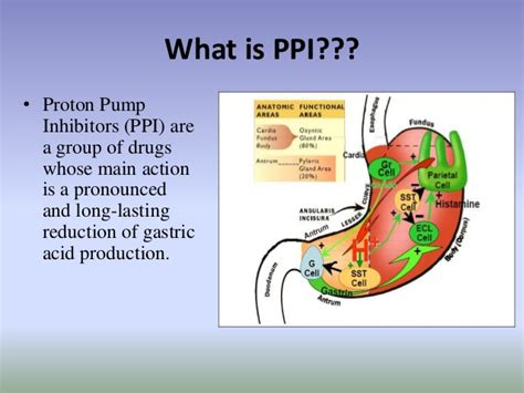 Proton Pumps by Proton Inhibitor Ppi