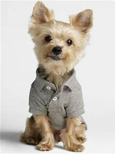 Yorkie, Puppys and Products on Pinterest