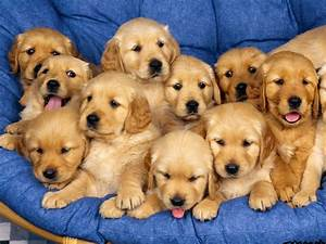 Pictures of beautiful puppies | Nice Wallpapers, Animals ...