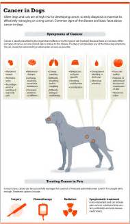 Lymph Node Cancer Symptoms in Dogs