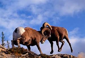 rocky - Animal Stock Photos - Kimballstock