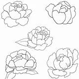 Peony Coloring Pages Patterns Drawn Paint sketch template