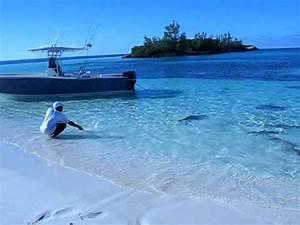 Rare Shark Feeding Frenzy in North Carolina | Doovi