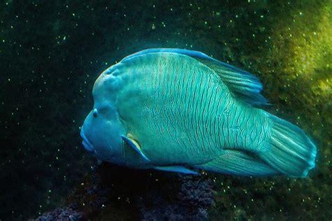 25 best ideas about nausicaa aquarium on