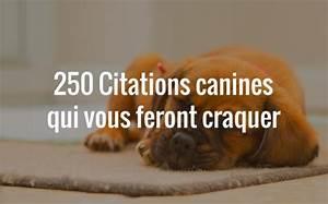 Laisser Un Chien Seul Quand On Travaille : 250 citations canines qui vous feront craquer ~ Medecine-chirurgie-esthetiques.com Avis de Voitures