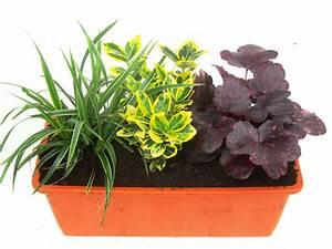 Ganzjahresbepflanzung Für Balkonkästen : balkonpflanzen set f r balkonk sten 40 cm lang pflanzen ~ Michelbontemps.com Haus und Dekorationen