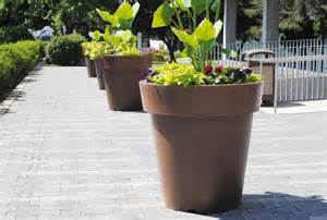 fleurs pour pots et jardinieres remc homes