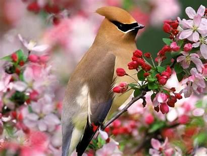 Birds Wallpapers Bird Desktop Backgrounds Nature Nice