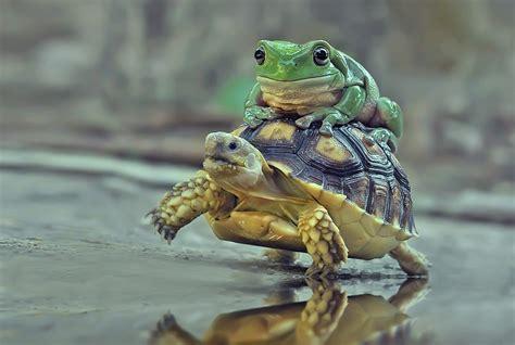 whimsical wildlife photography isnt