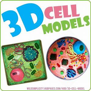 3d Plant  U0026 Animal Cell Models