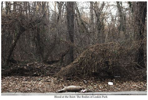 The Bodies Of Leakin Park Based On