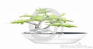 Baum Im Topf : ein bonsai baum im blumen topf auf wei em hintergrund ~ Michelbontemps.com Haus und Dekorationen