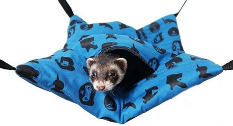 ferret beds and hammocks ferret beds and hammocks and lolesinmo