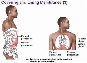 5 Anatomical Terminology At Lewis