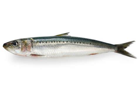 cuisine vegetarienne simple et rapide quelles sont les vertus de la sardines gourmand