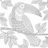Paradise Coloring Tropical Adult Template sketch template