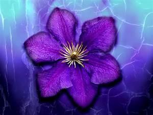 Photos Of Purple Flowers 8 Hd Wallpaper ...