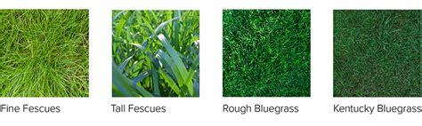 how many kinds of grass are there cool season grasses definition uses types of cool season grasses