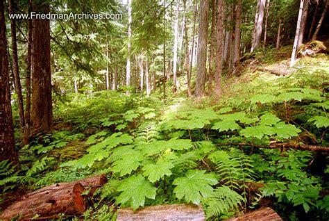 floor l leaves on rainforest floor 8x12 300 dpi