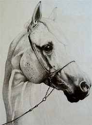 Horse Head Pencil Drawings