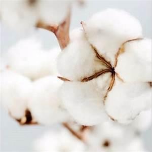 Bougie Fleur De Coton : bougie 4 meches durance 500g fleur de coton ~ Teatrodelosmanantiales.com Idées de Décoration