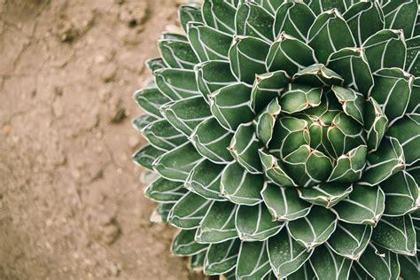 Anspruchslose Garten Pflanzen by Pflegeleichte Pflanzen Die Top 10 Die Nicht Gegossen