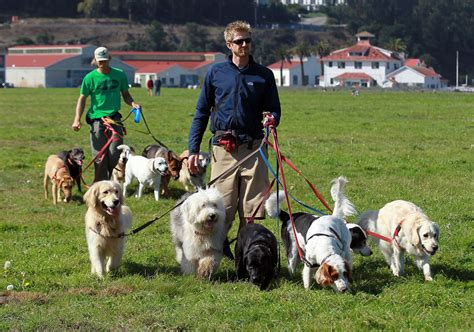 dog professional walkers walker walking francisco san become business hobby things ky turn seeks license zimbio should jon