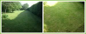 Gazon Pour L Ombre : faire une pelouse a l 39 ombre ~ Premium-room.com Idées de Décoration