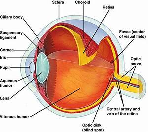 Not Of The Eye Diagram Labeled Easy