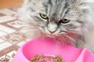 Wie Fange Ich Eine Katze : wie viel kostet eine katze im monat ~ Markanthonyermac.com Haus und Dekorationen
