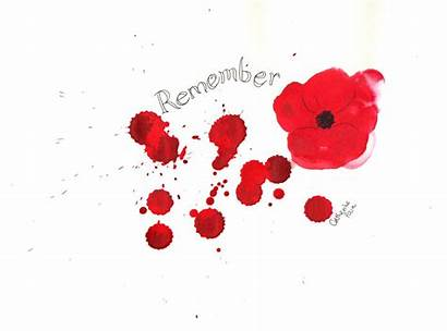Remembrance Poppy Flower Blood Remember Memorial Poppies